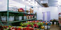 Floral Storage